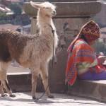 Local Girl and Lama, Cusco, Peru