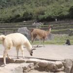 Locals at Machu Picchu